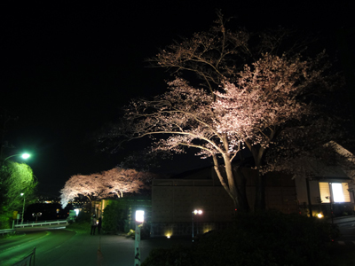 okano_1.jpg
