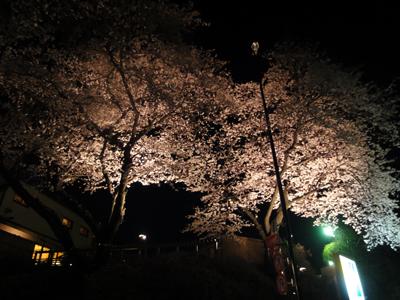 okano_2.jpg
