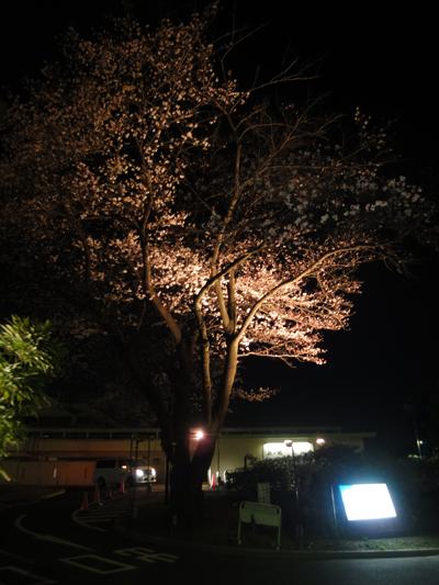 okano_3.jpg